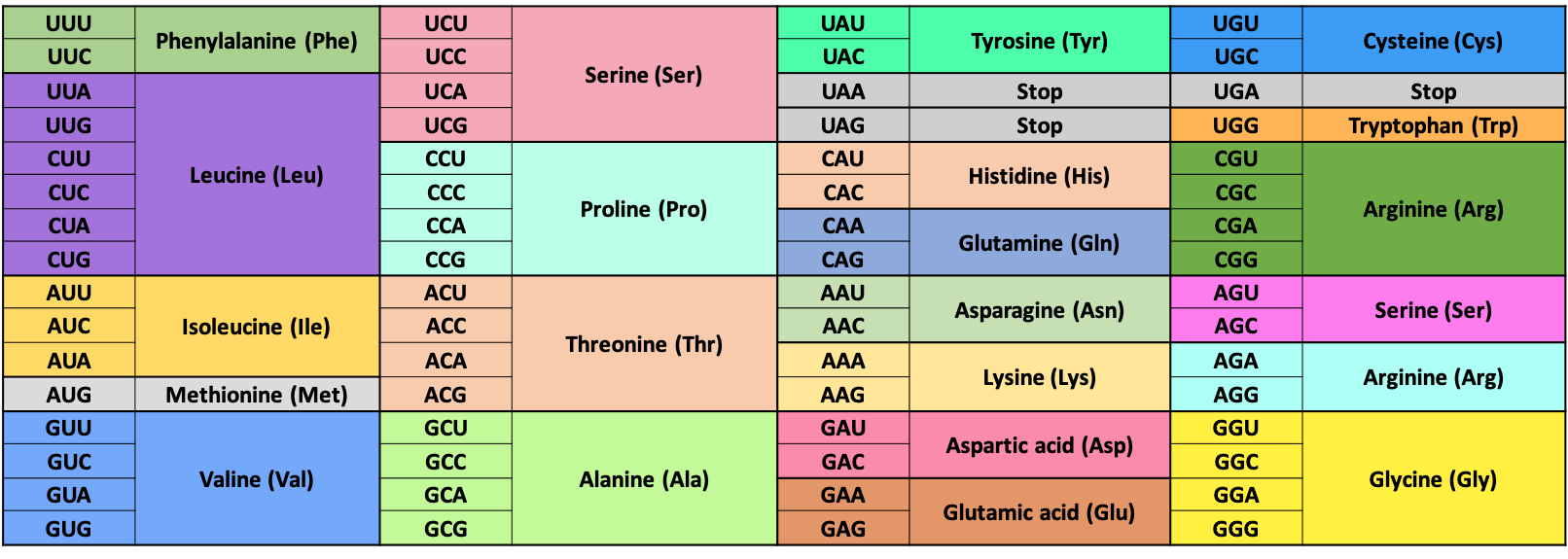 Table of the standard genetic code. Codons and their corresponding amino acids along with their three letter codes.