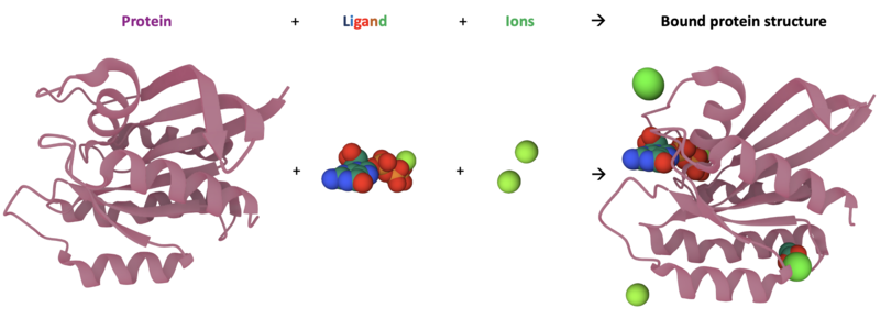 """The """"HRas GTPase"""" protein shown as a native structure and as a fully-bound structure with ligands and ions bound"""