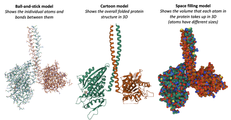 Different ways of displaying the 3D shape of the kinesin motor protein