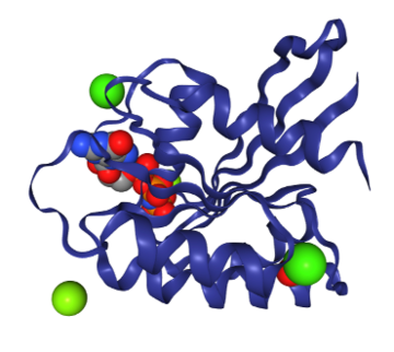 3D structure of the HRas GTPase protein with ligands and ions bound